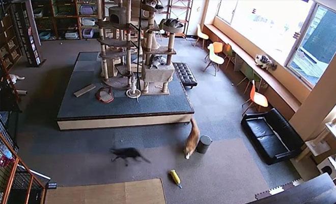 Как в Японии кошки предсказывают землетрясение