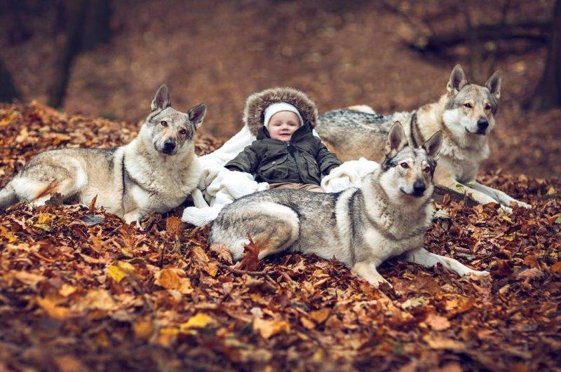 Остается только гадать, как было сделано это интересное во всех отношениях фото! дети, дружба, животные, кошки, ребенок, собаки