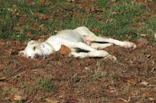 Узнав, что у него паралич, хозяева решили избавиться от этого пса. Но на этом его история не закончилась...