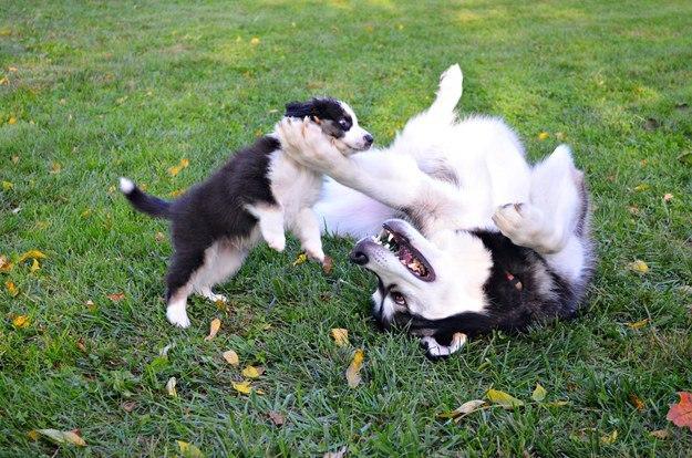 самые милые щеночки в мире (7)