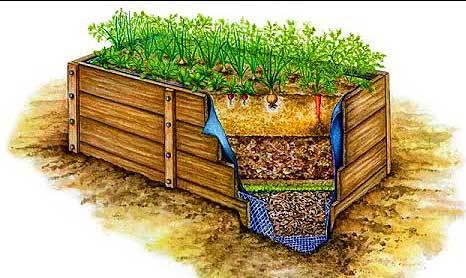 Схемы питающих грядок дающих небывалые урожаи