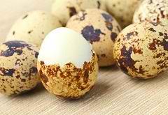 Перепелиные яйца — польза и …