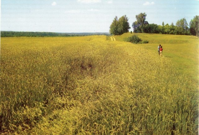На Бородинском поле, 1970-е история, люди, мир, фото