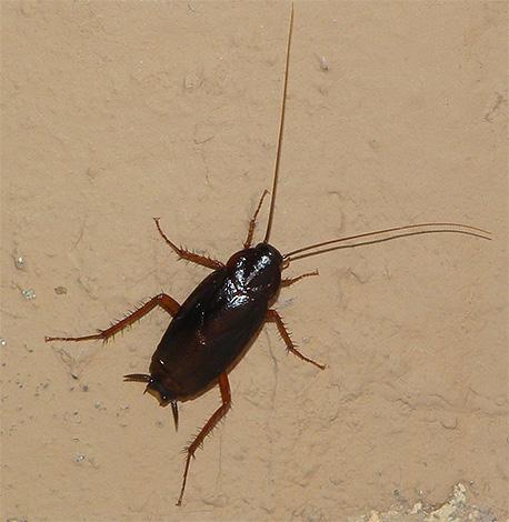 вредители человека насекомые