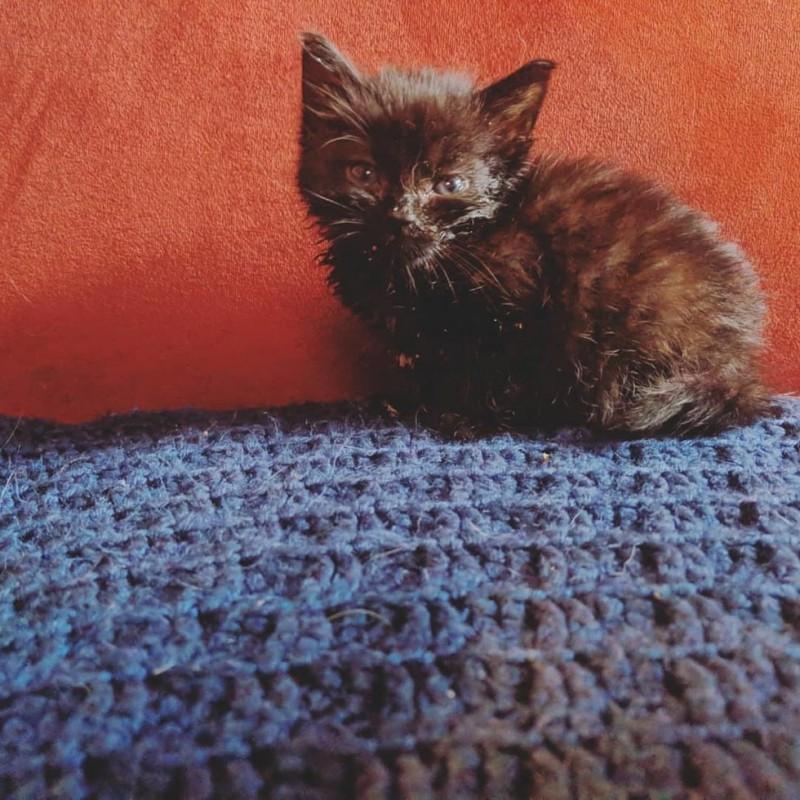 Черный котенок из приюта неожиданно стал менять цвет на серый