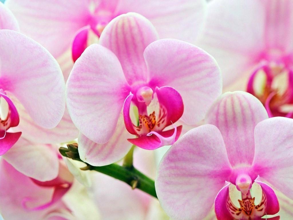 Мифы об орхидеях