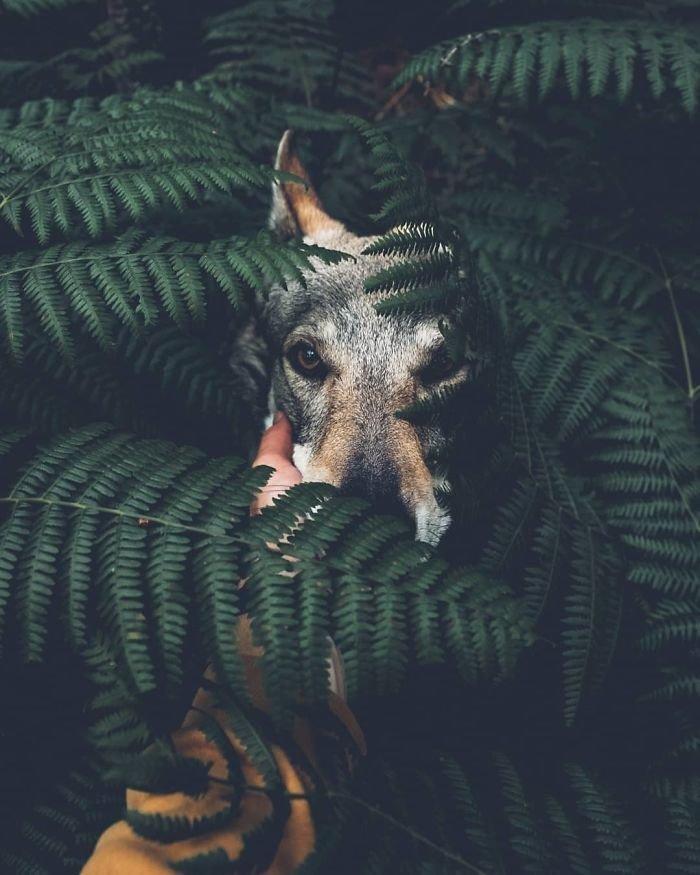 7. follow me, инстаграмм, собака, собака - друг человека, флешмоб, флешмобы. instagram, фото природы, фотограф