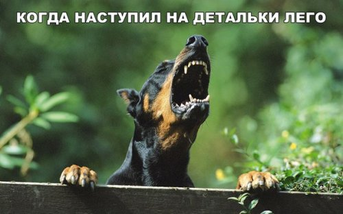 Субботние анекдоты (11 шт)