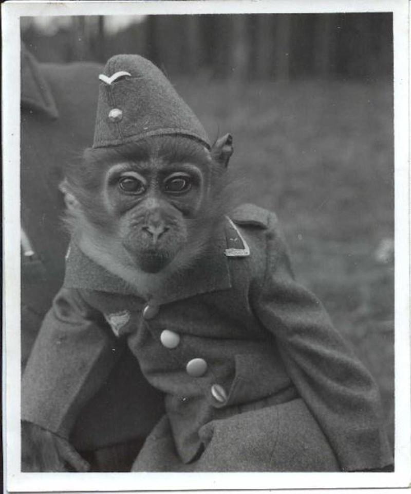 Смешные картинки немцев, смешные