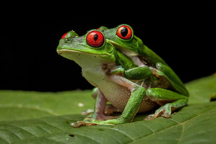 Разновидности лягушек картинки