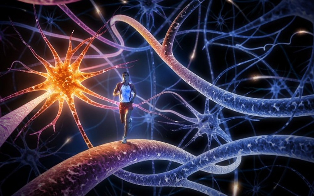 Физические упражнения меняют нашу ДНК