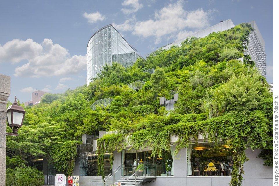 Сады на крыше: история и современность ландшафтный дизайн,сады на крыше