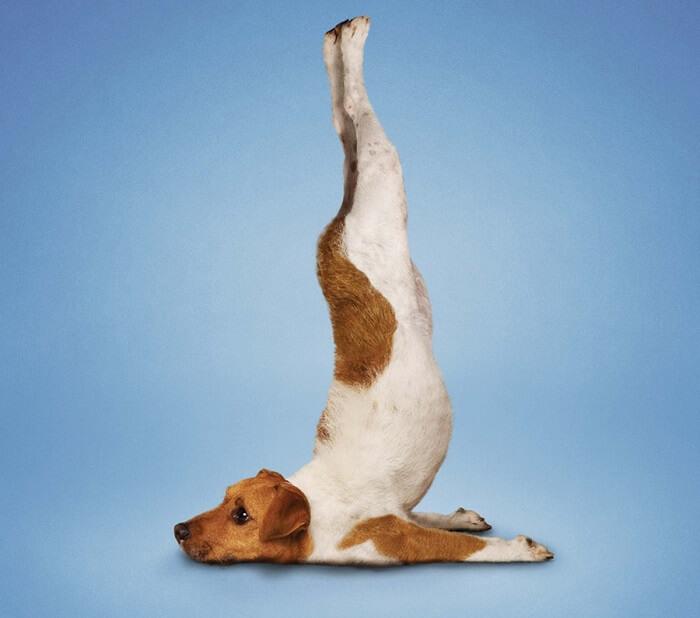 Смешные позы йога картинки, надписями