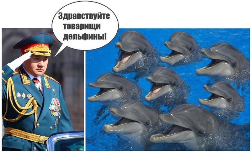 Дельфины отказались слушать команды Шойгу и умерли от голода