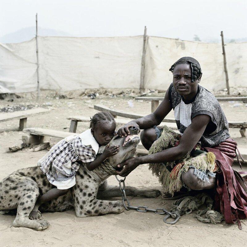 Трудности их содержания заключаются в нескольких моментах африка, гиены, животные, интересное, приручение, факты