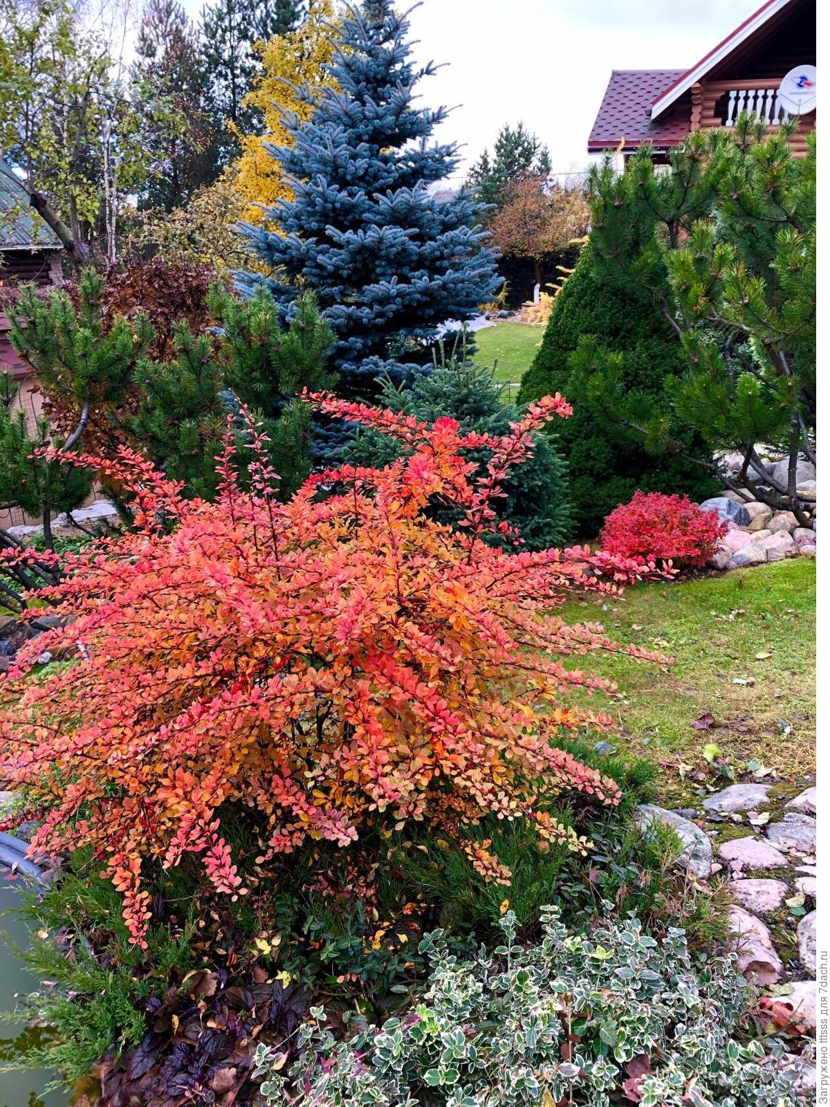 Сад непрерывного цветения - мечта, которую может осуществить каждый цветов, самых, являются, семьи, просто, лилии, конца, показать, огромное, множество, различных, цветы, цветением, смотрятся, сезона, бакопа, любимых, играть, очень, радуют