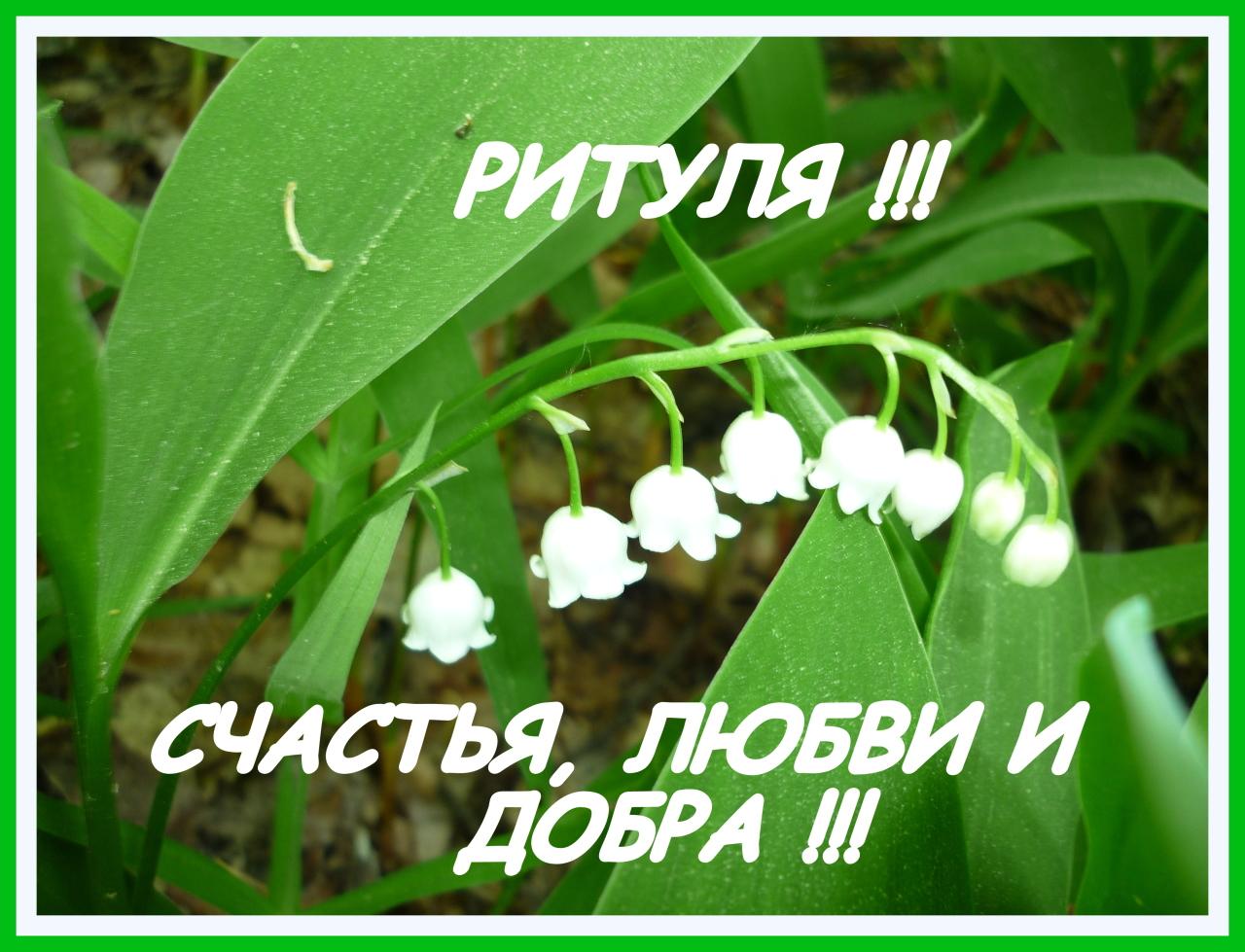 Все цветы тебе одной лишь только я дарю, Марго!  Все цветы и наши верные сердца!