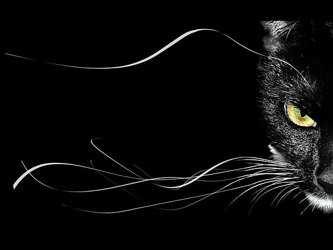 Немного о черных кошках