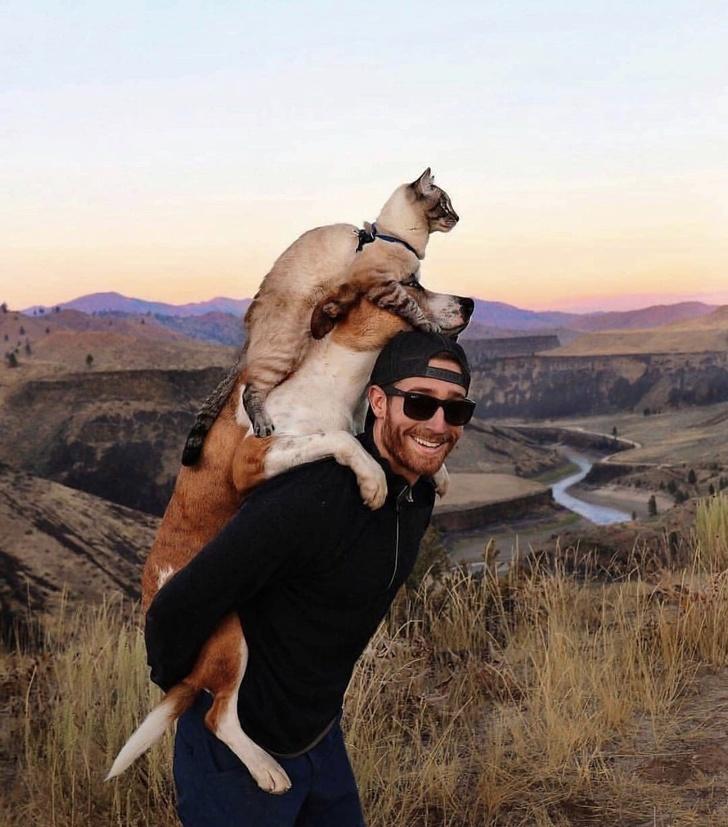 19фото отрогательной любви между животным ичеловеком