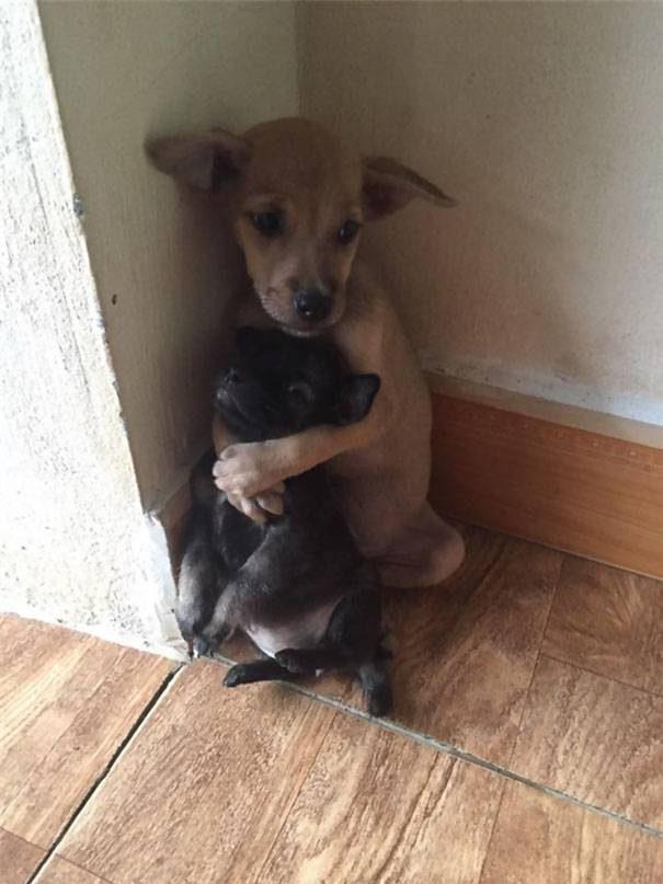 Обнимающиеся бездомные щенки
