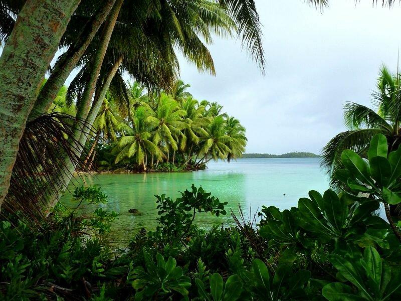 Кокосовые пальмы на острове Страун (атолл Пальмира)