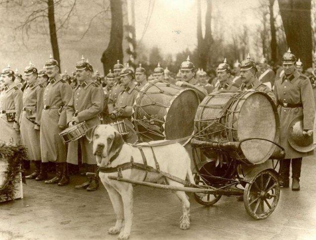 Военный оркестр с собакой-литаврщиком. Кенигсберг.1912-1913 г. история, люди, мир, фото