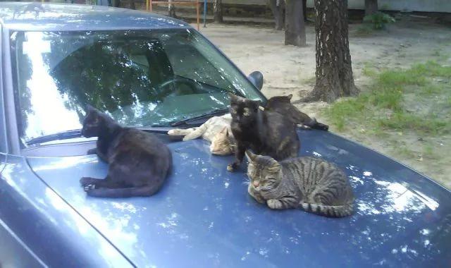 Не обижайте котов!