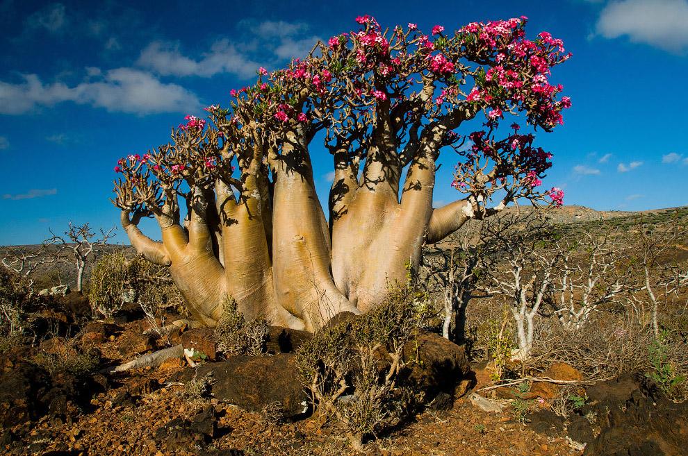ещё видели растения всего мира картинки отшутилась, вступление