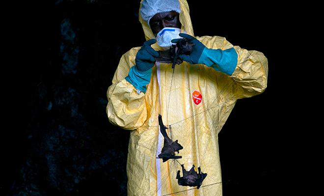 Ученые смоделировали на карте, откуда придет новая пандемия и назвали примерные даты