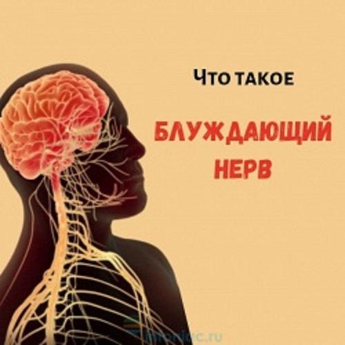 Блуждающий нерв: почему он важен….