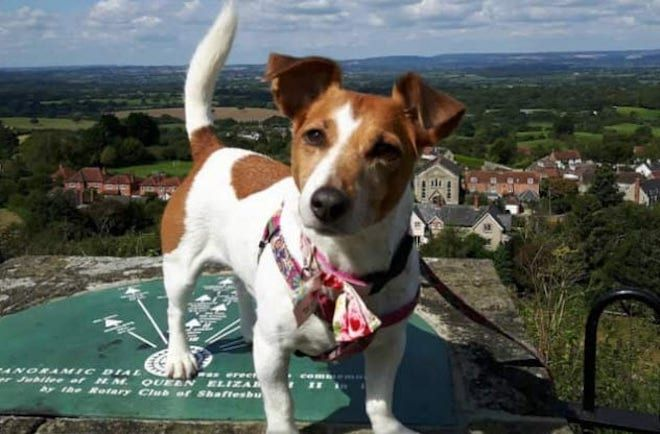 10 удивительных историй о собаках, спасших жизнь людям