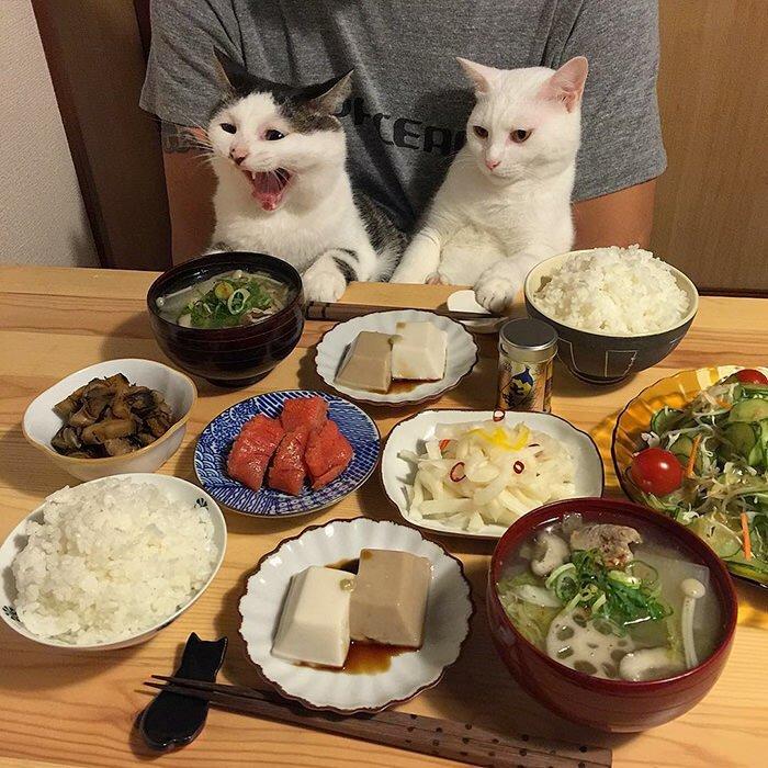 Вкусный обед смешная картинка