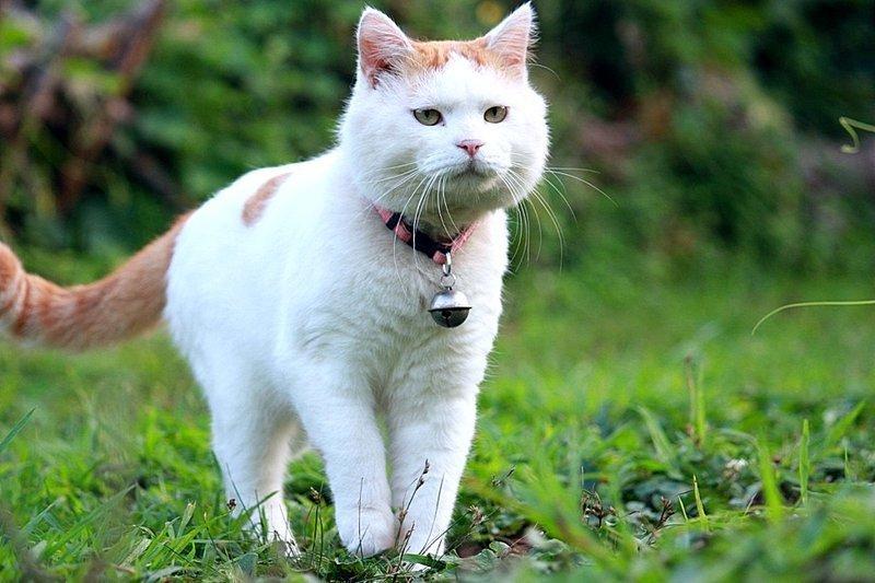 В городе Крескилл в Нью-Джерси все коты и кошки должны носить 3 колокольчика, чтобы птицы всегда знали об их расположении. информация, картинки, факты