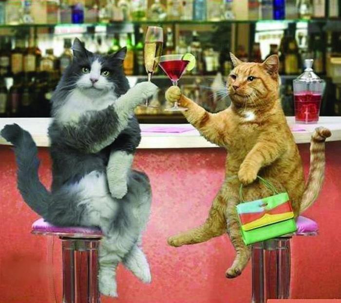 Все собаки и кошки в Беларуси родились при Лукашенко анекдоты,веселье,демотиваторы,котики,приколы,смех,юмор
