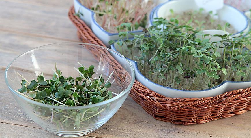 Проростки - полезная альтернатива зимним овощам и фруктам: что, как и зачем сеять