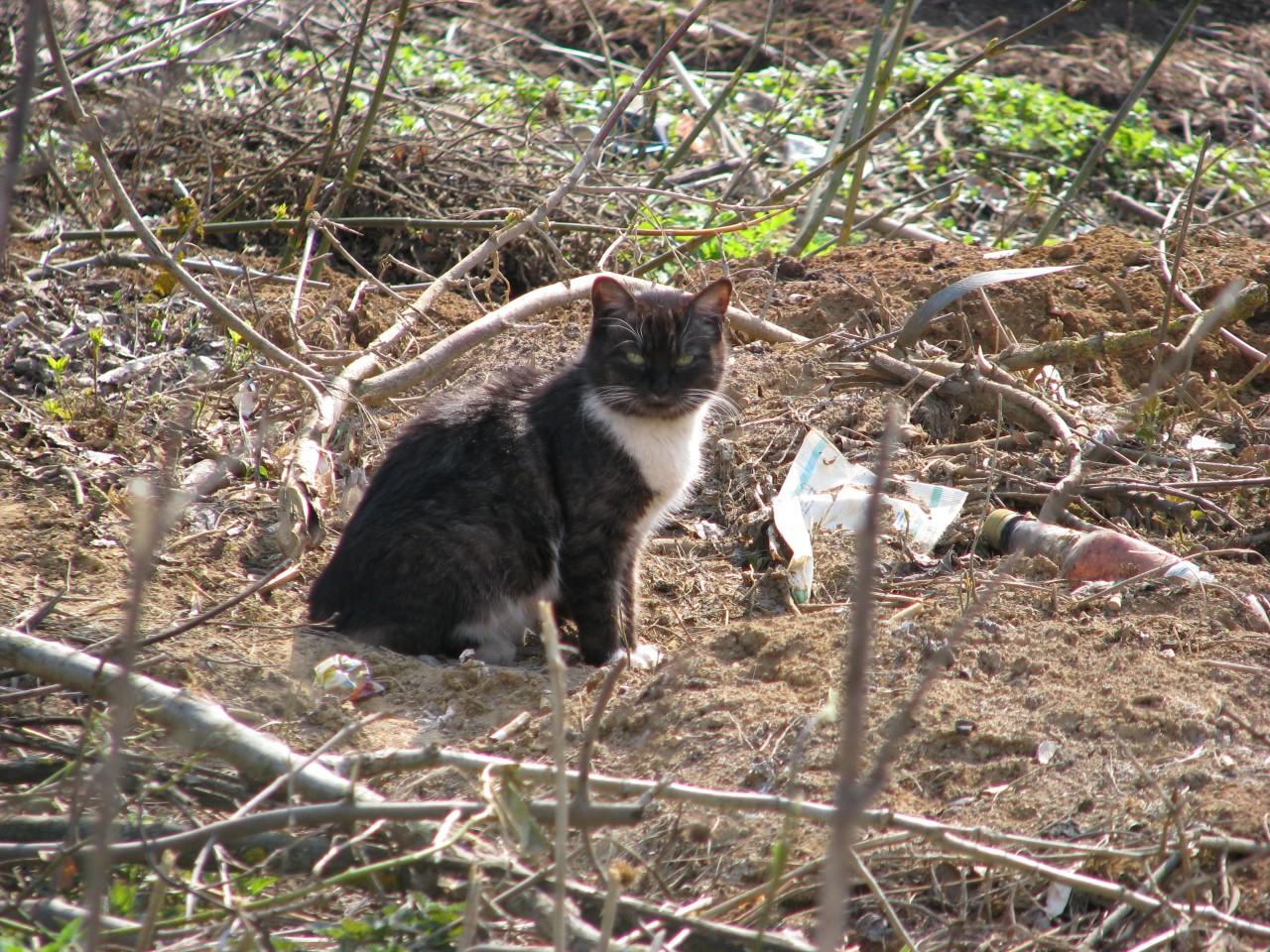 Братья наши меньшие: брошенный кот останется на совести