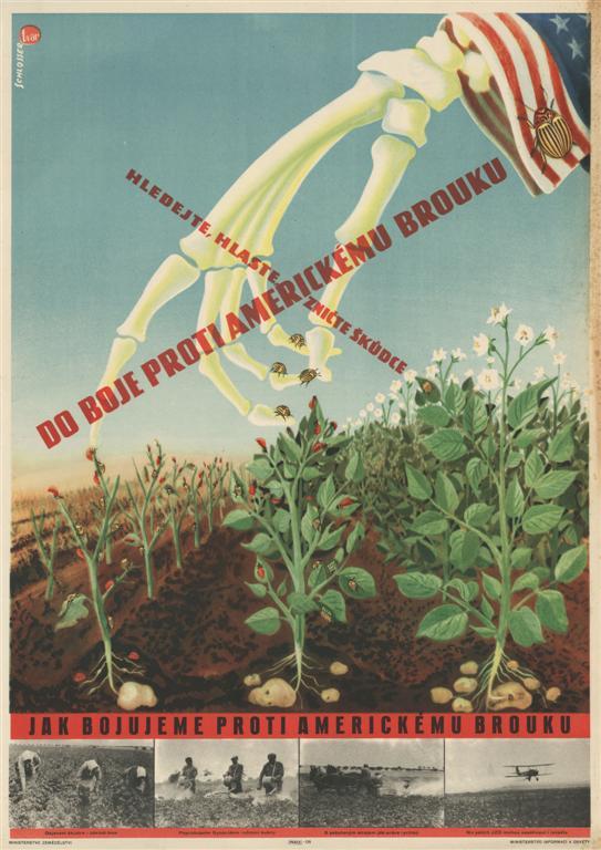 Как пропаганда стран социализма боролась с колорадским жуком