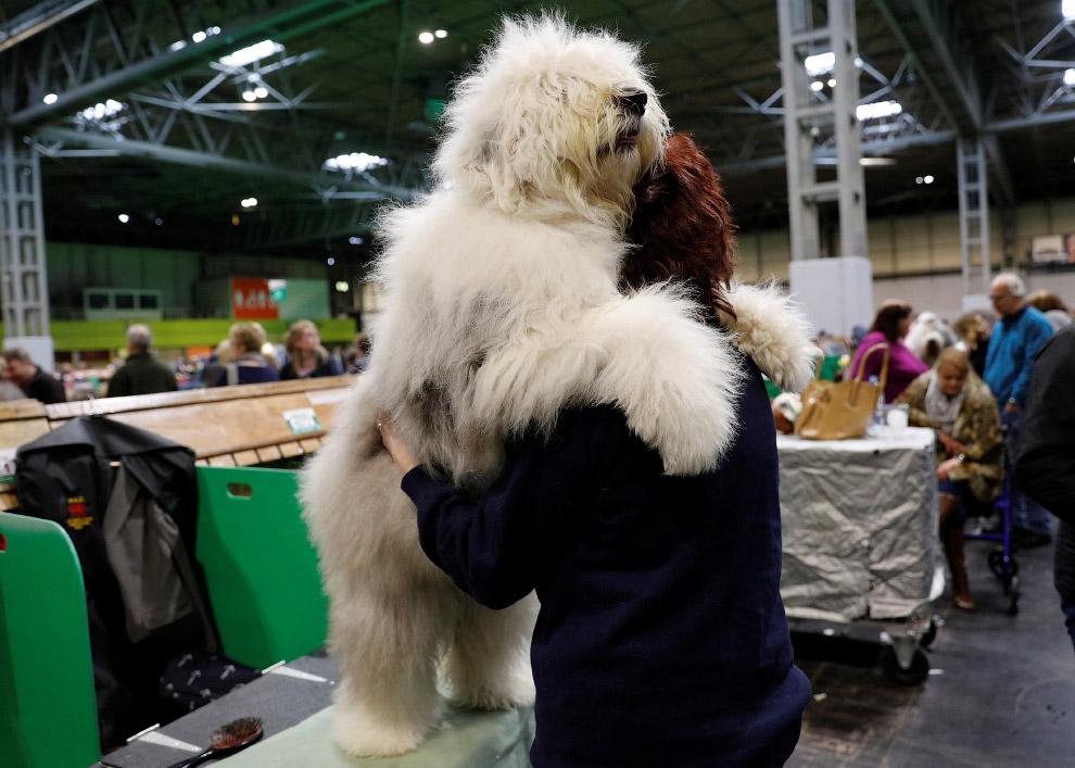 Crufts Dog Show 2018: как прошла крупнейшая в Европе выставка собак