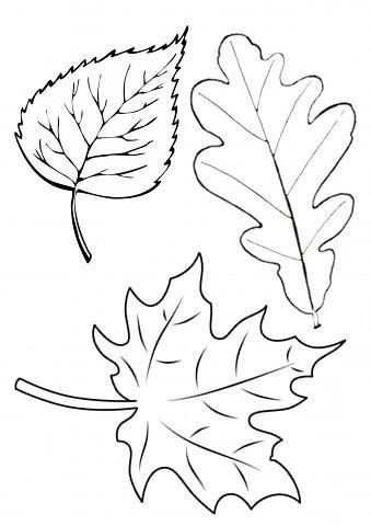 Ежик в осенних листьях. Шаблоны (5) (339x480, 59Kb)