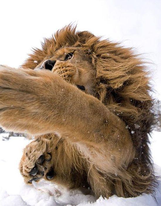 Удивительные фотоснимки животных