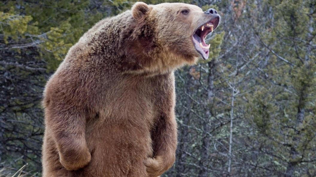 Фотокурсы в медведково такая функция
