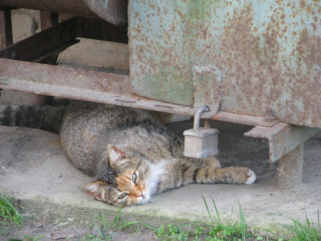 Братья наши меньшие: словно кот на столе у ветеринара