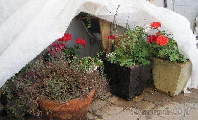 Что делать с контейнерными растениями и уличными кашпо осенью