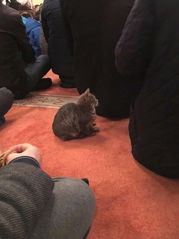 Турецкий имам впускает бездомных кошек в мечеть, чтобы они могли согреться жизненное