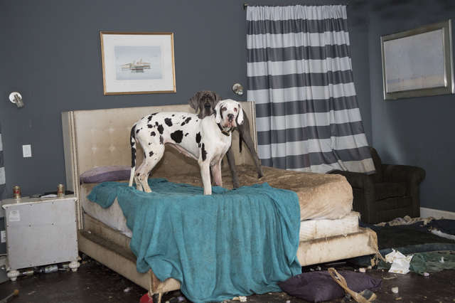 собаки в спальне