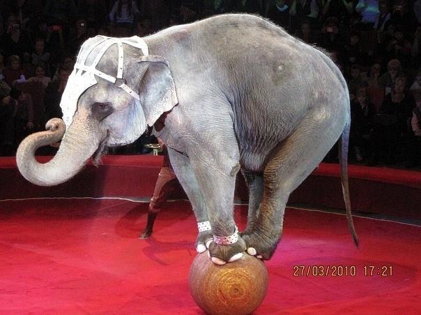Минутка юмора, или слон в Верховной Раде