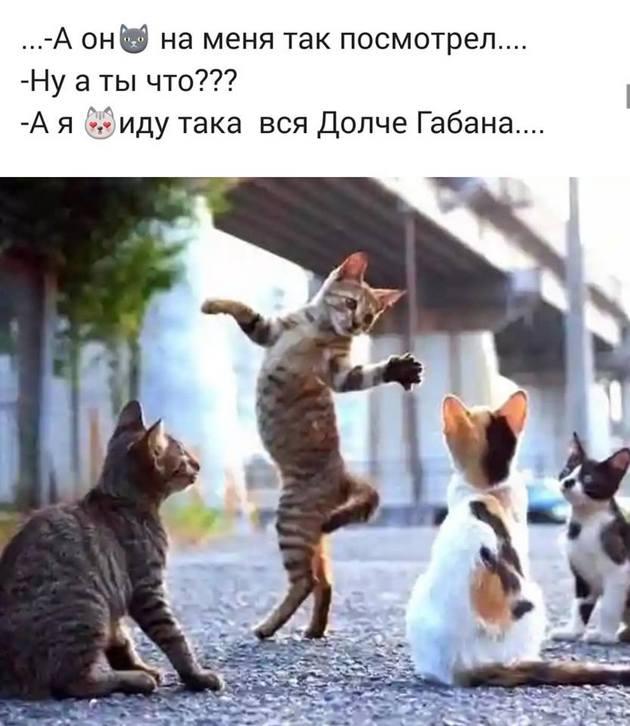 https://mtdata.ru/u30/photo324E/20916916080-0/original.jpeg#20916916080