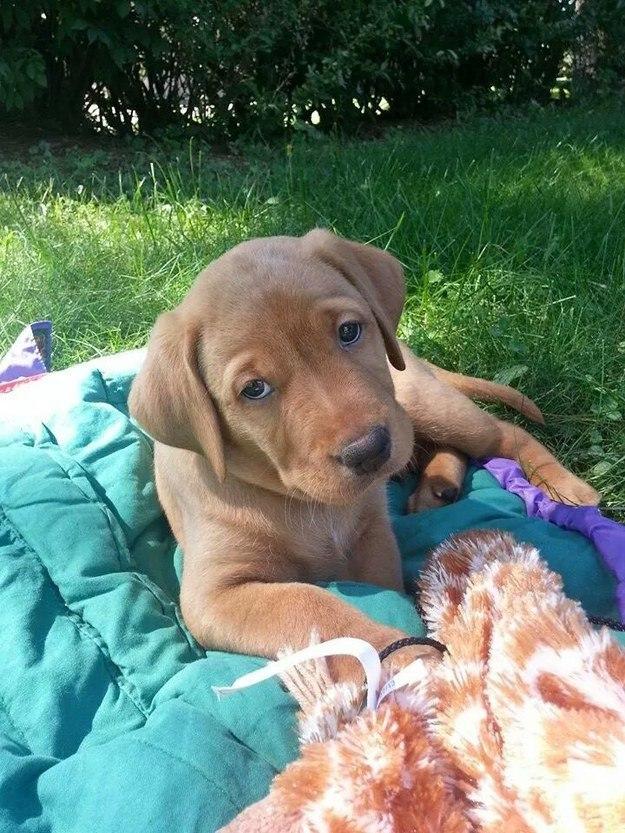 самые милые щеночки в мире (33)
