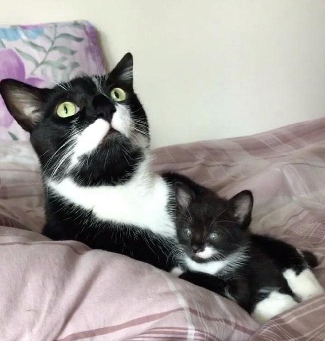Котенок с котом