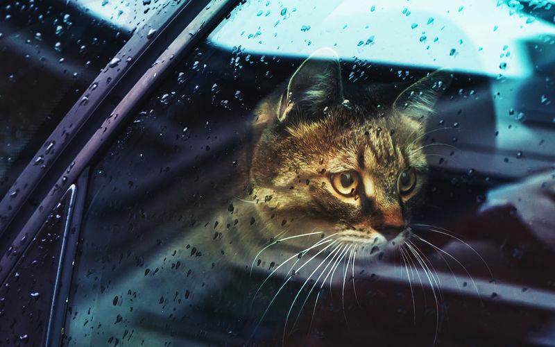 Мы едем на охоту! — думают собаки в машине. Но нет авто,автомобиль,Россия